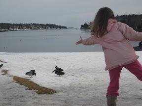 Feeding ducks at Sir Fleming Park in Halifax, Nova Scotia, Canada