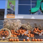 sobeys in the fall