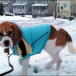 A dog feels the chill of snow on his paws as Bedford gets blanketed with its first snowfall of the season.