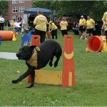 A member of the Cool Canines Agility Team races through an obstacle course during Bedford Days at DeWolf Park. To see photos from Day 2, click on thumbnails below.