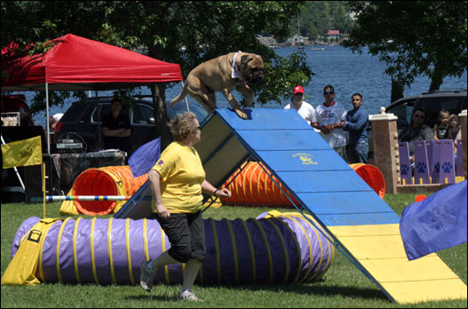 Bedford Days: Dog Day of Summer