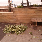 Someone pulled out all the plants on the halifax waterfront. ... on Twitpic