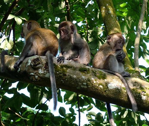 Monkey See Monkey Do – Teaching Kids Money