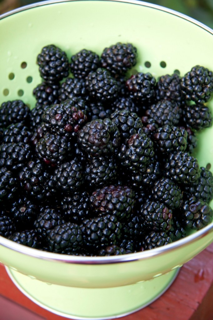 blackberries by The Culinary Chase
