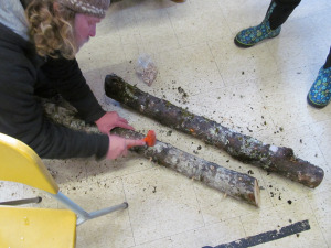 Eric Fresia is shown here drilling holes in a sugar maple log, to prepare it for shiitake spores.