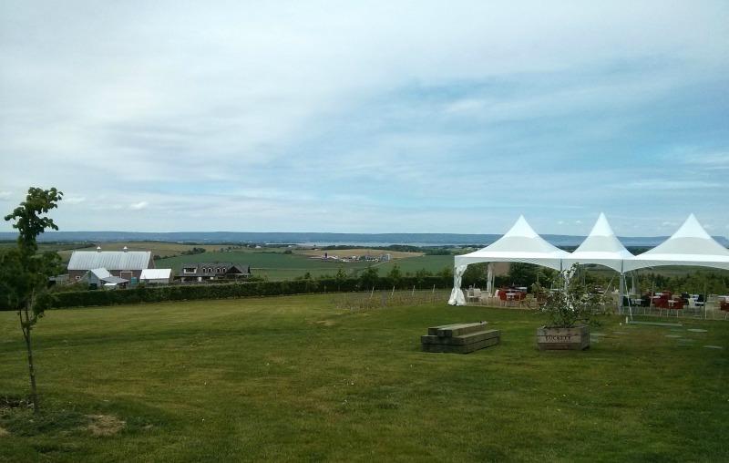 Luckett Vineyards view