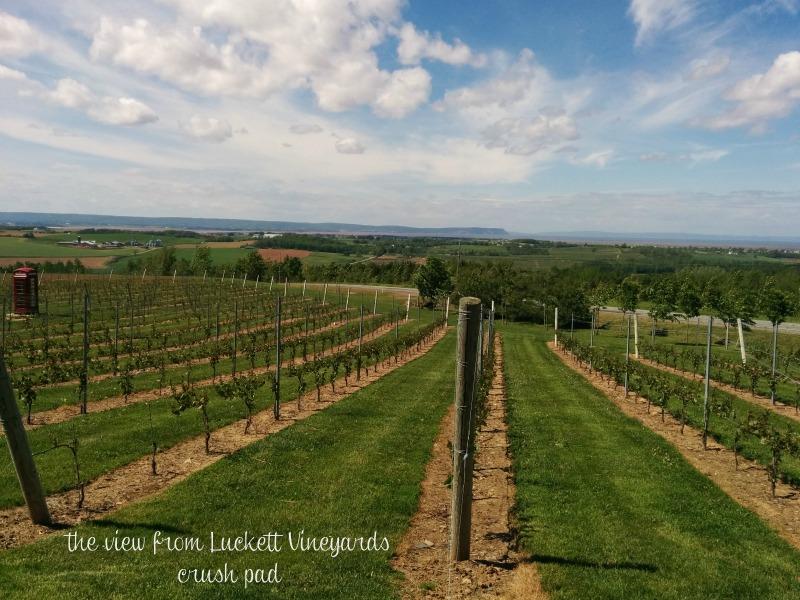 view from Luckett Vineyards crush pad