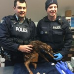 Cst. Derek Bigger (left) and Auxillary Cst. Darren Forsyth (right) pose for a picture with the fawn they delivered into the world.