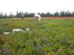 blueberry_gleaning