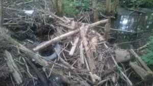 Little Sackville River Debris Jam