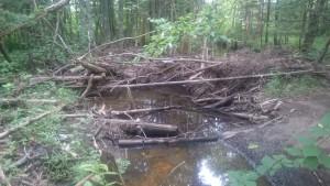 Little Sackville River Debris Jam2