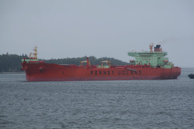 I took this picture while sword fishing off Nova Scotia – weekly news bits #5