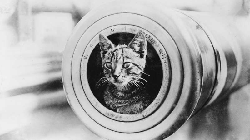 Cats of the Royal Navy – Weekly News #12